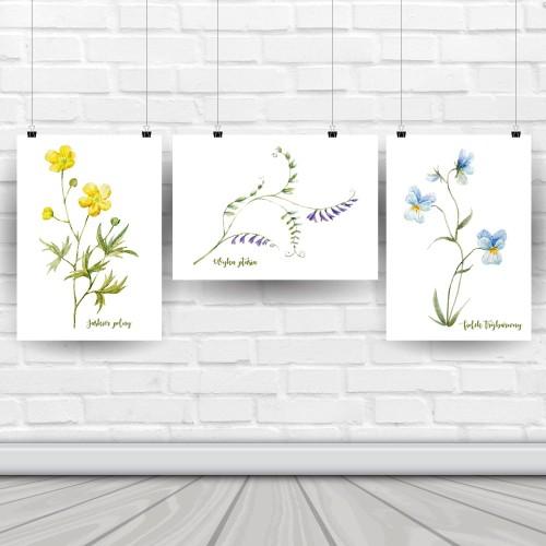 Plakaty Polne Kwiaty